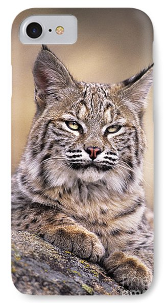 Bobcat Cub Portrait Montana Wildlife IPhone Case by Dave Welling