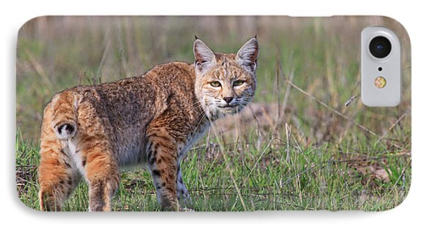 Bobcat Glance IPhone Case by Beth Sargent