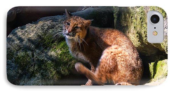 Bobcat Grooming Itself IPhone Case by Chris Flees