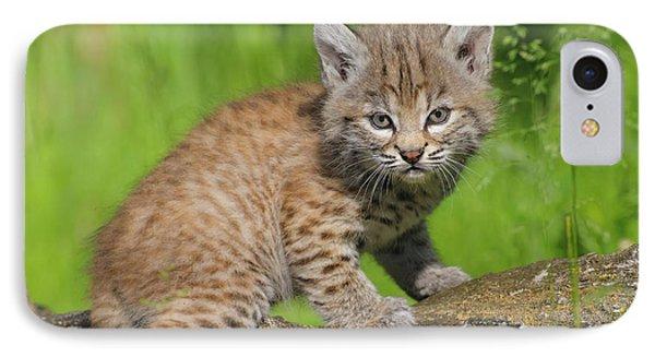Bobcat Kitten  Felis Rufus  On Log IPhone Case