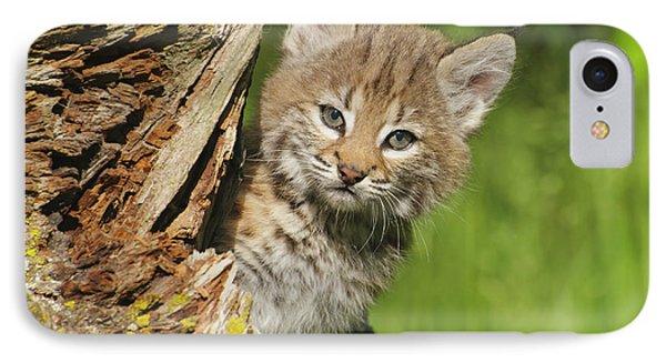 Bobcat Kitten  Felis Rufus  Peeks IPhone Case