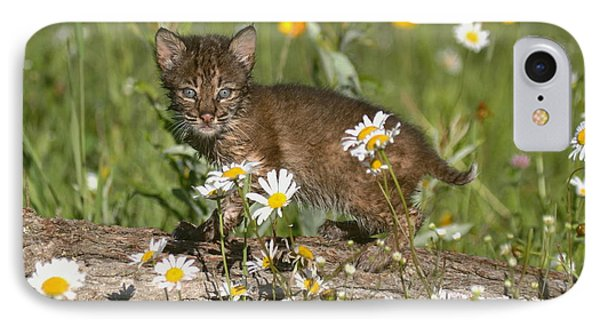 IPhone Case featuring the photograph Bobcat Kitten In The Flowers by Myrna Bradshaw