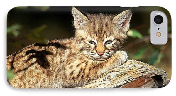 Bobcat Kitten Lynx Rufus IPhone Case by Art Wolfe