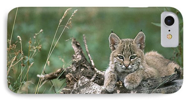 Bobcat Kitten Resting On A Log Idaho IPhone Case by Michael Quinton