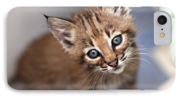 Bobcat Kitty IPhone Case by Wendi Matson