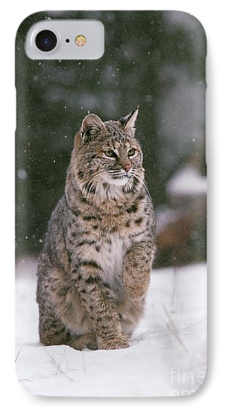 Bobcat Lynx Rufus In Winter Snow IPhone Case by Ron Sanford