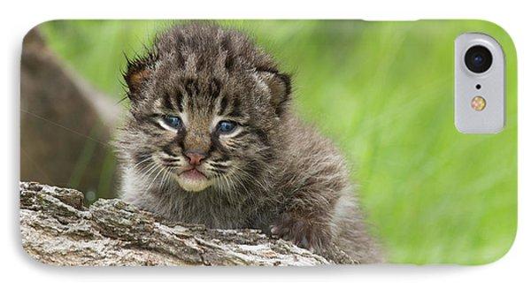 Bobcat Lynx Rufus Kitten IPhone Case by Debbie Dicarlo
