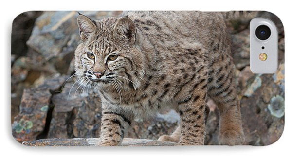 Bobcat On Rock IPhone Case by Jerry Fornarotto