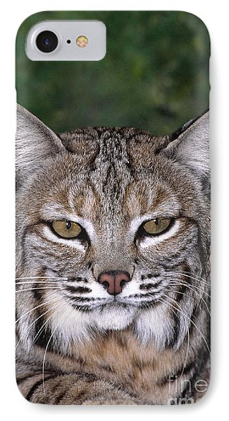 Bobcat Portrait Wildlife Rescue IPhone Case by Dave Welling