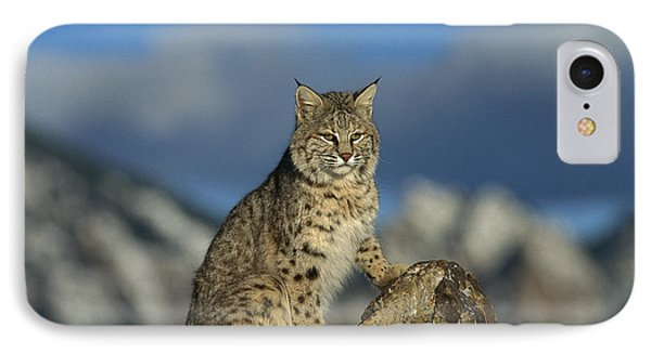 Bobcat  Rocky Mountains IPhone Case by Konrad Wothe