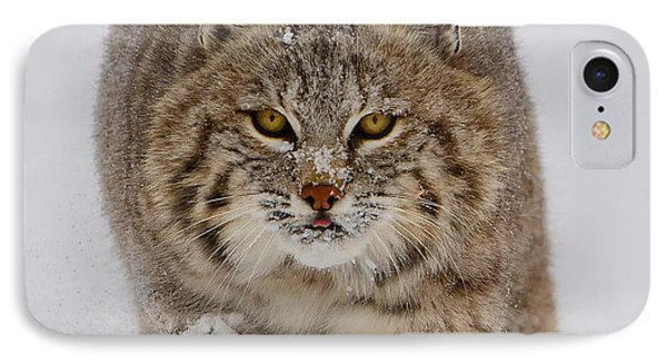 Bobcat Running Forward IPhone Case by Jerry Fornarotto