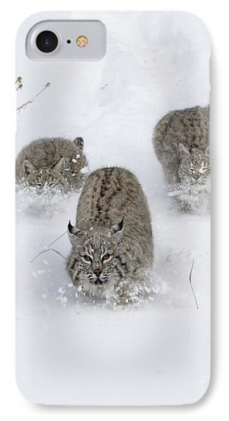 Bobcat Trio IPhone Case by Wildlife Fine Art