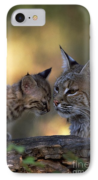 Bobcat With Kitten IPhone Case