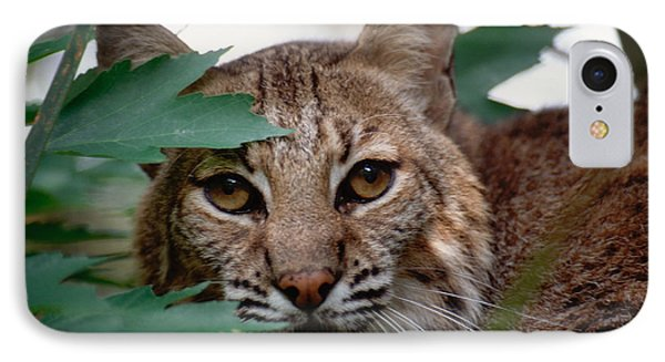 IPhone Case featuring the photograph Bobcat With Maple Leaves by Bradford Martin