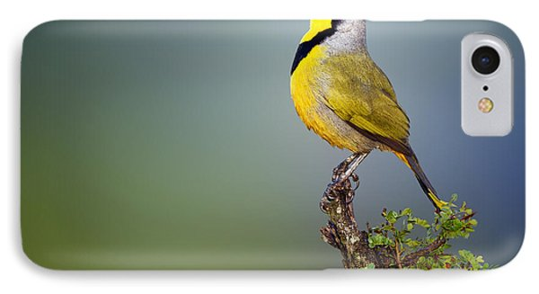 Bokmakierie Bird - Telophorus Zeylonus IPhone Case by Johan Swanepoel