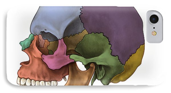 Bones Of The Skull Lateral IPhone Case