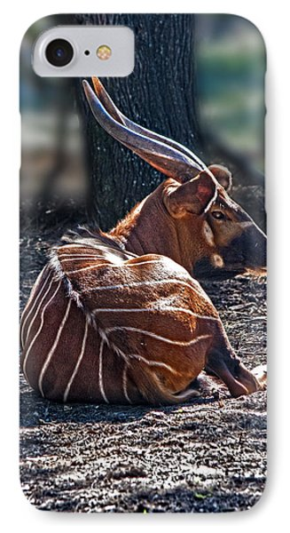 Bongo IPhone Case by Miroslava Jurcik