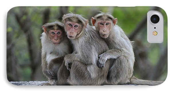 Bonnet Macaque Trio Huddling India IPhone Case by Thomas Marent
