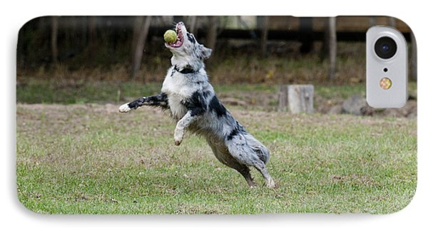 Border Collie Catching A Ball IPhone Case by William H. Mullins