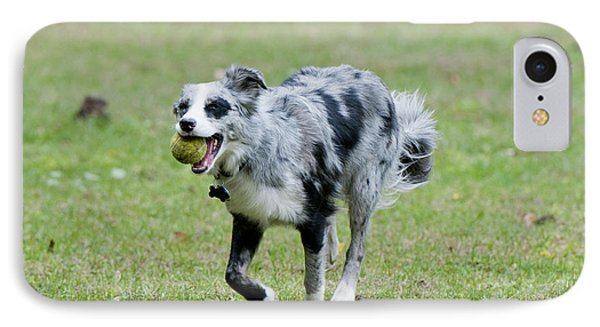 Border Collie Retrieving A Ball IPhone Case by William H. Mullins