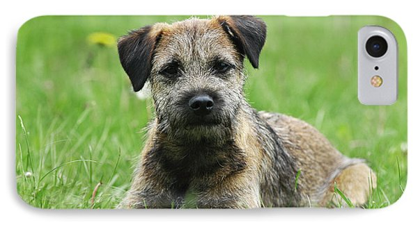 Border Terrier Dog Lying In Grass IPhone Case by Dog Photos