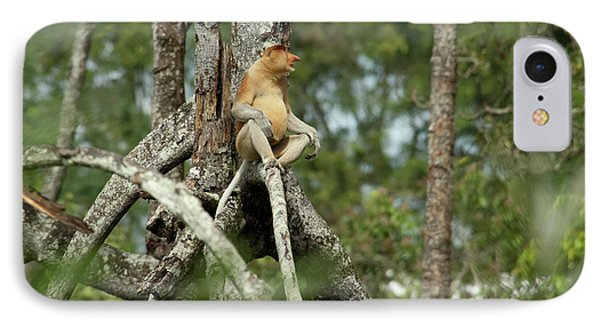 Borneo, Brunei Mangrove Forest IPhone Case by Cindy Miller Hopkins