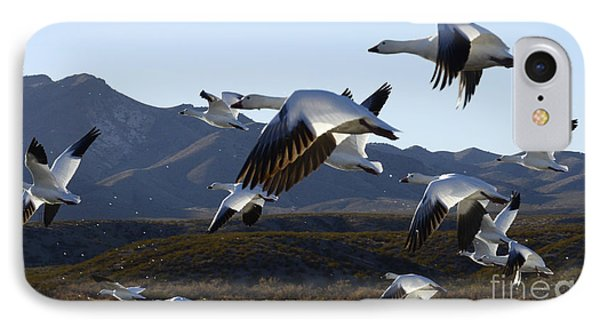 Bosque Del Apache Snow Geese In Flight Phone Case by Bob Christopher