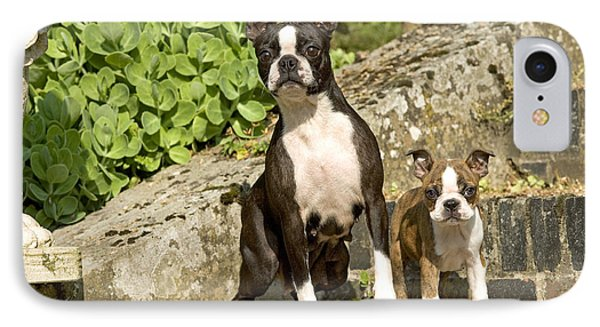 Boston Terrier And Puppy IPhone Case by Jean-Michel Labat