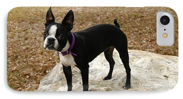 IPhone Case featuring the photograph Boston Terrier On The Rock by Donald Williams