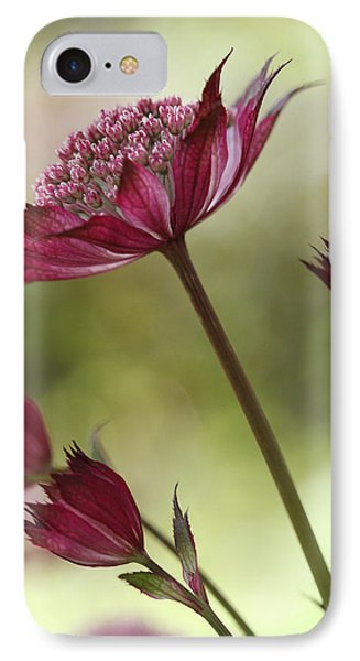Botanica IPhone Case by Connie Handscomb