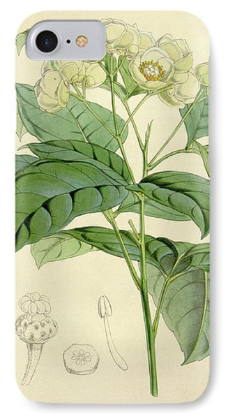 Botanical Print By Walter Hood Fitch 1817 – 1892 IPhone Case