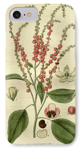 Botanical Print Or English Natural History Illustration IPhone Case