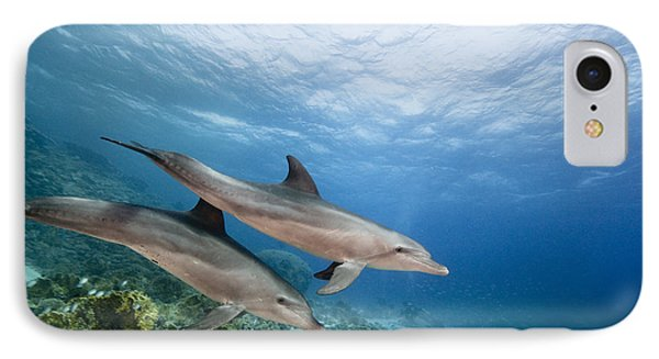 Bottlenose Dolphins Swimming Over Reef IPhone Case