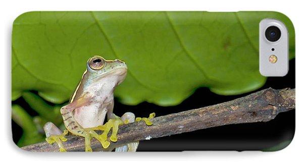 Boulenger's Tree Frog IPhone Case by K Jayaram