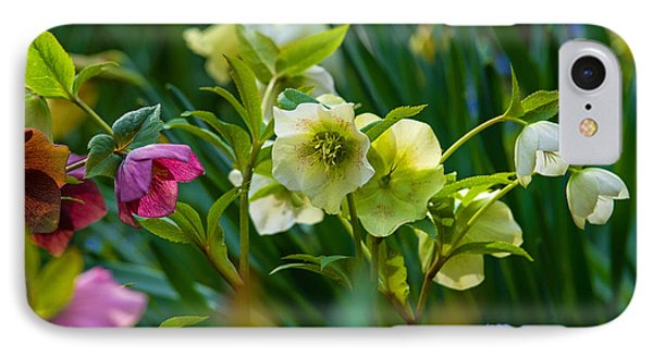 IPhone Case featuring the photograph Bouquet Of Lenten Roses by Jordan Blackstone