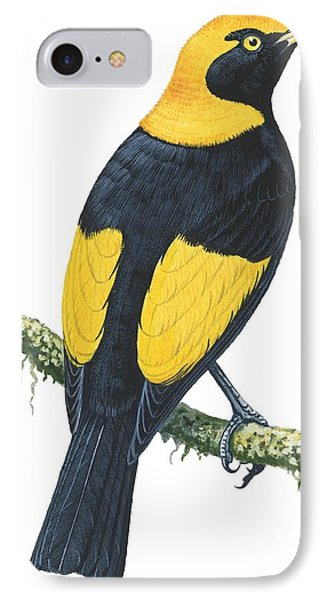 Bowerbird  IPhone Case