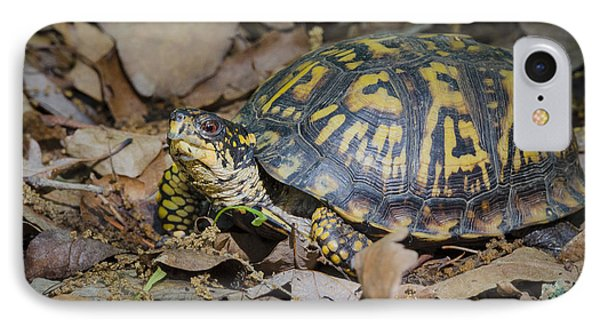IPhone Case featuring the photograph Box Turtle Sunning by Bradley Clay
