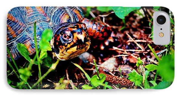 Box Turtle IPhone Case by Tara Potts