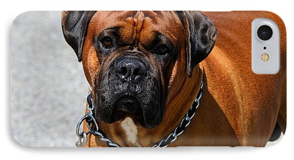 Boxer IPhone Case by Kathy Eickenberg