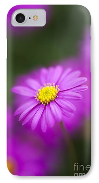 Swan River Daisy IPhone Case