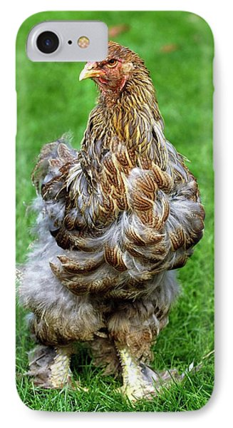Brahma Chicken IPhone Case