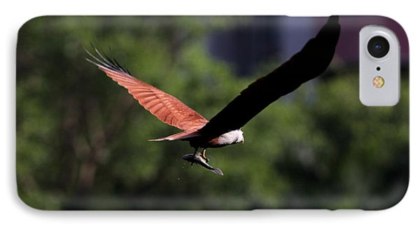 Brahminy Kite With Catch  IPhone Case