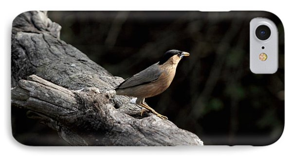 Brahminy Starling IPhone Case