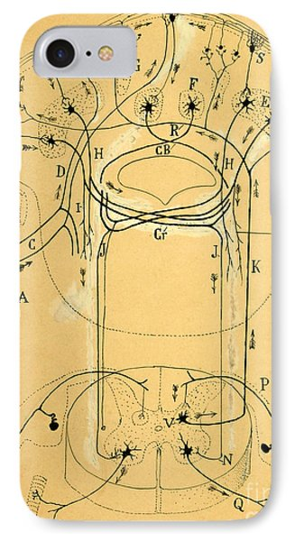 Brain Vestibular Sensor Connections By Cajal 1899 IPhone Case by Science Source