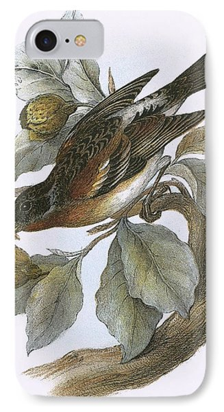 Brambling IPhone Case by English School
