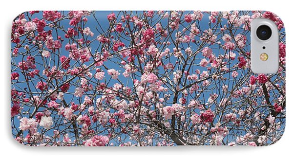 Branches And Blossoms Phone Case by Carol Groenen