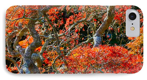 Branches Of Color IPhone Case by Cathy Dee Janes