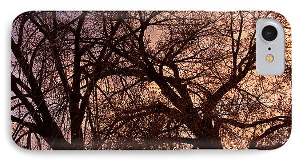 Branching Out At Sunset Phone Case by James BO  Insogna