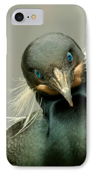 IPhone Case featuring the photograph Brandt's Cormorant by Bob and Jan Shriner