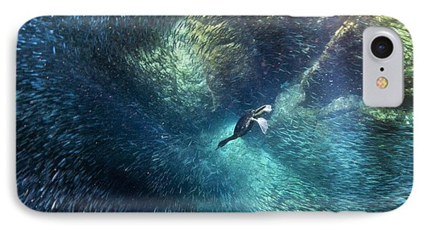 Brandt's Cormorant Fishing IPhone Case by Christopher Swann